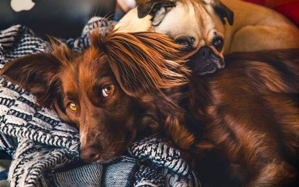 5 Best Dog Foods for Dogs w/ Allergies & Sensitive Stomachs