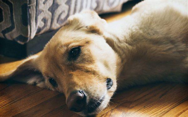 Top 5 Best Dog Foods for Allergies & Shedding | 2021 Reviews